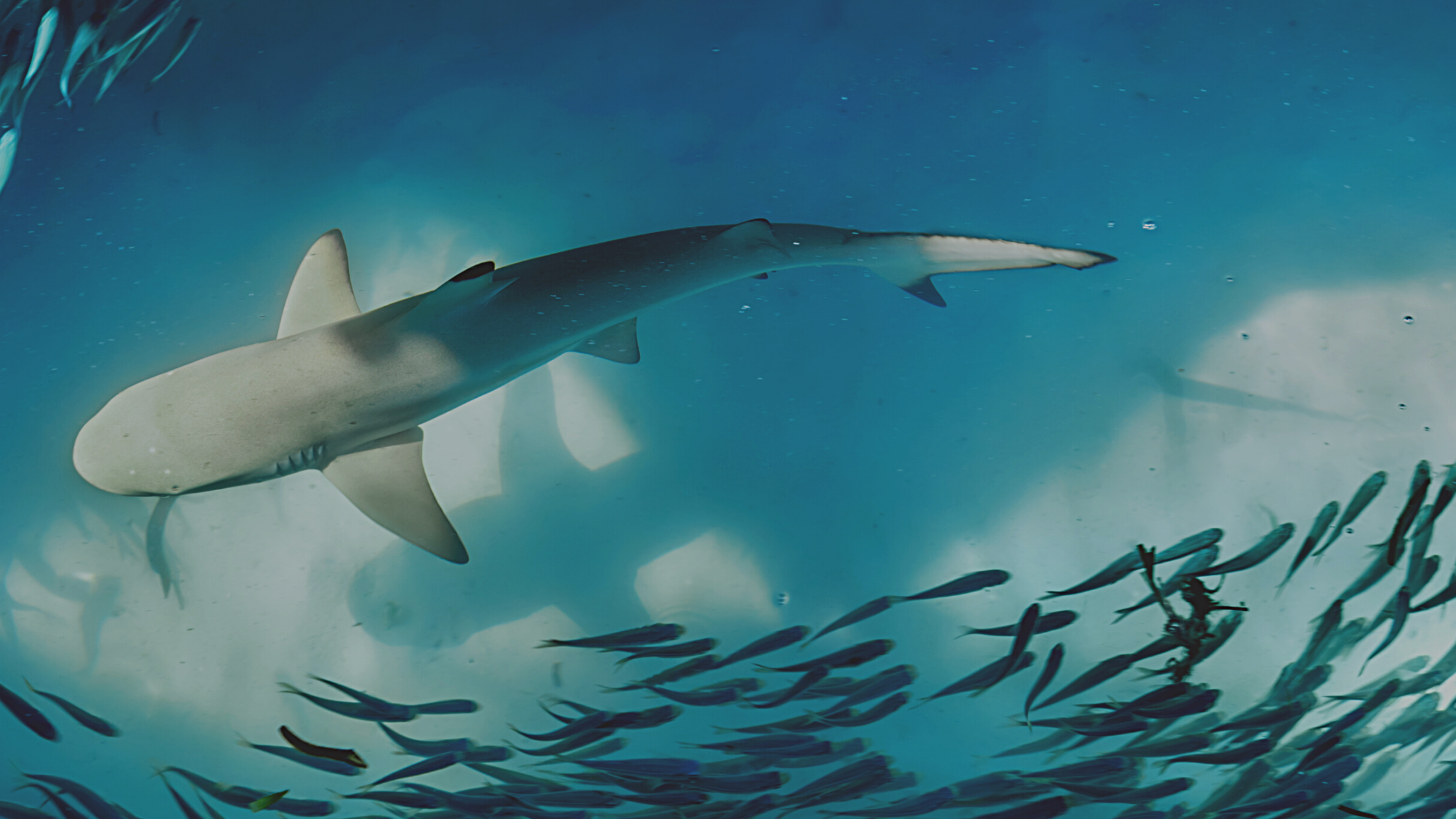 Want to Avoid Cyber Sharks? Swim With The School. 4/14 Small Business Webinar.